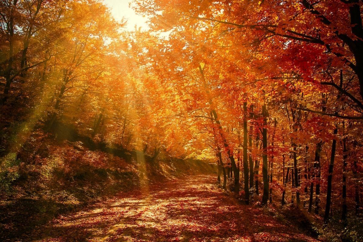 Herbst_massan